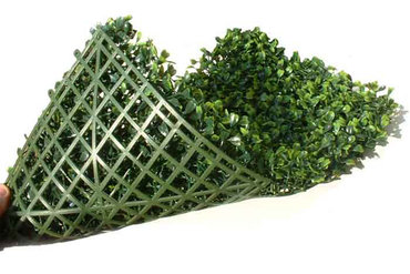 Bestel sample Buxus 20 x 20 cm  € 5,95 incl. verzendkosten