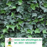 www.tuin-afsluitingen.be