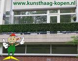 Buntes Buchsbaum Kunsthecke_