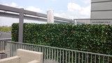 kunsthaag als terrasscherm