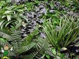 Jungle kunsthaag