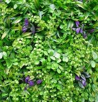 Penningkruid-vegetatie kunsthaag