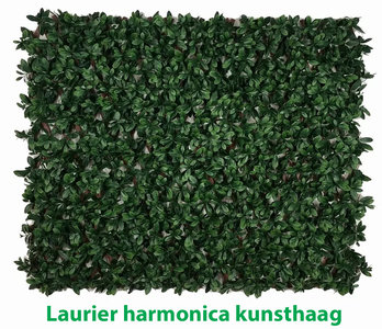 Laurier harmonica kunsthaag